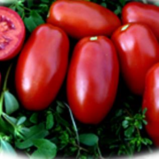 pomodori9_BIG